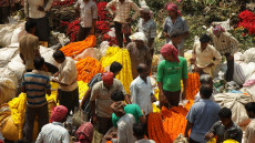 Blooming Madness – Calcutta's famous flower market