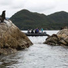 Explore New Zealand's Sub-Antarctic wilderness with Silversea Expeditions
