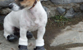 Struth! Pooch in Boots