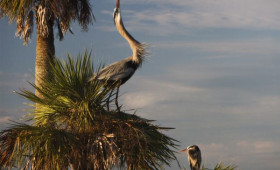Discover Florida's Great Outdoors through the National Geographic Online Hub