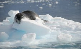 New voyage to lesser-known Antarctica launched