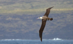Is this the world's rarest bird?
