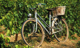 Cycle tours: Murray to Mountains Rail Trail with Tour de Vines