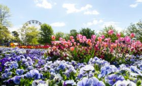 100 reasons to visit Canberra this spring